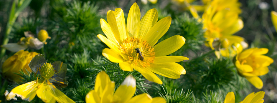 Blumen in gelb